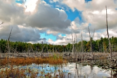 pano-w-h-pond-trail-04