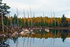 stump-pond-02
