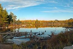 stump-pond-04