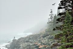 anp-fog-01-062709_0
