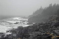 anp-fog-coast-01